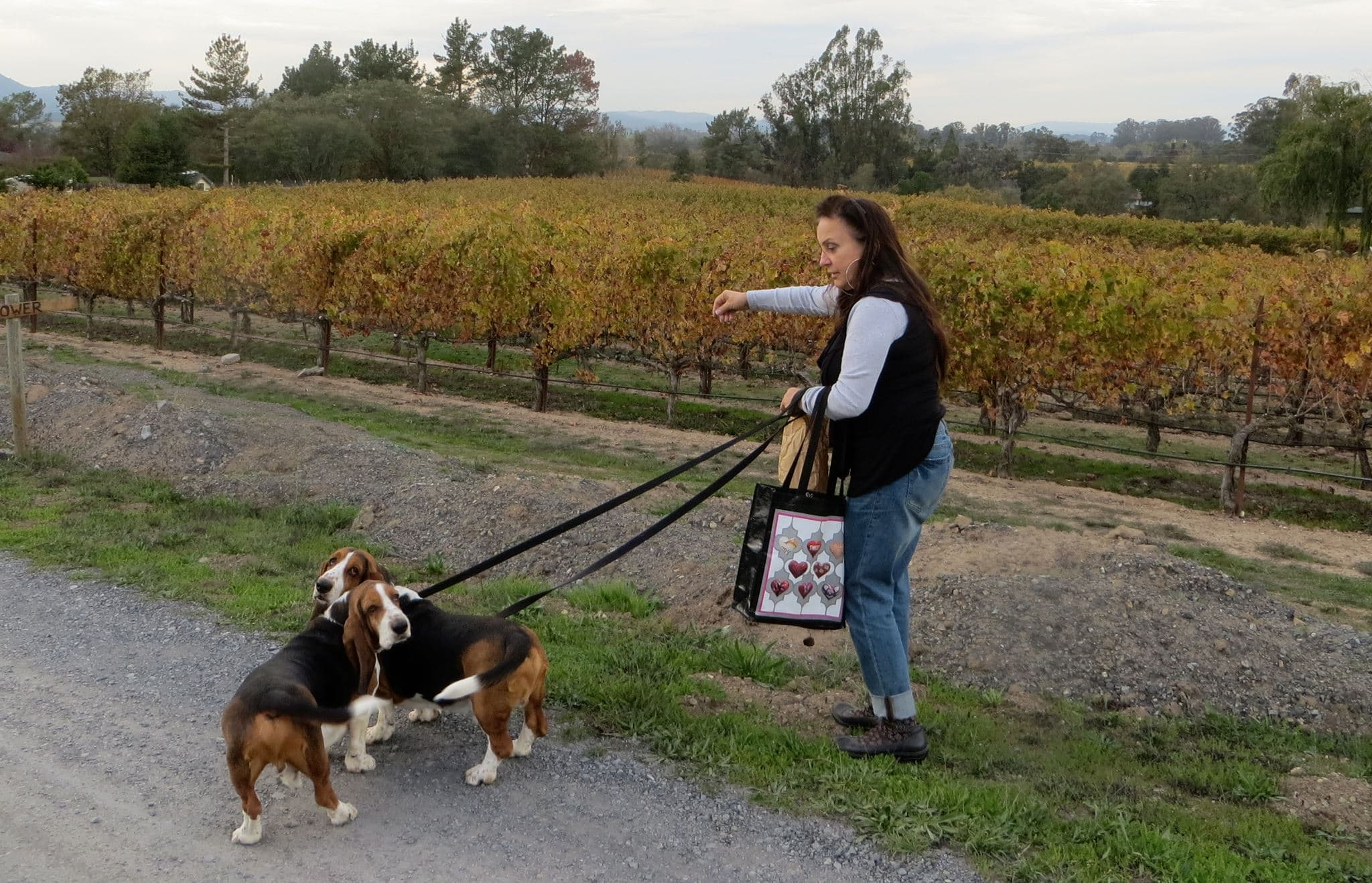 Winery Dogs in Sonoma County | Tara Bella Winery & Vineyards