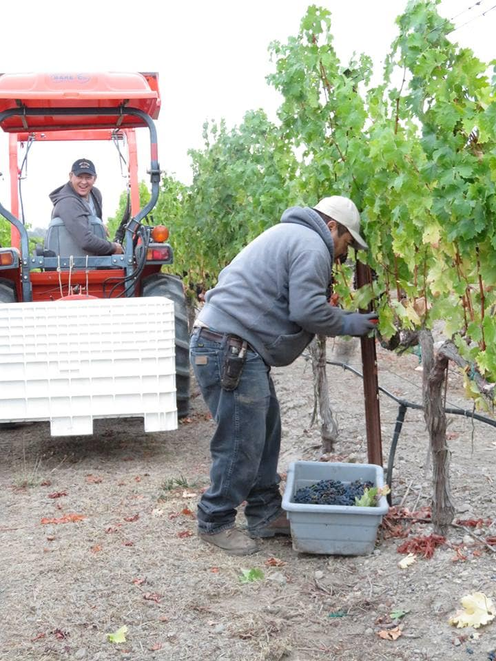 Tara Bella Winery, 2015 Harvest