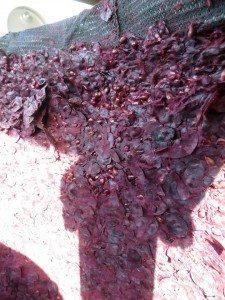 Pressed grapes